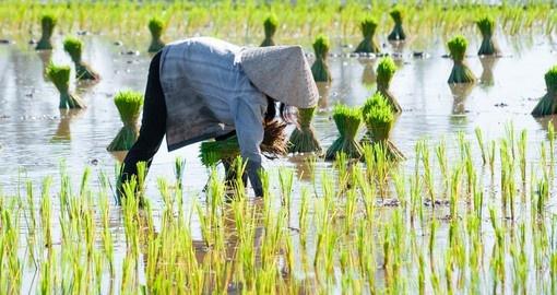 Delta du Mékong 1 - destination-asie