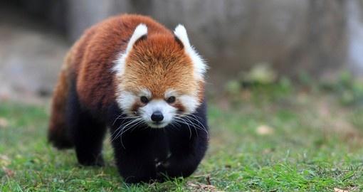 Bhoutan - Nature et faune sauvage
