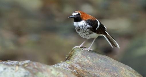 Brunei – Nature et faune sauvage